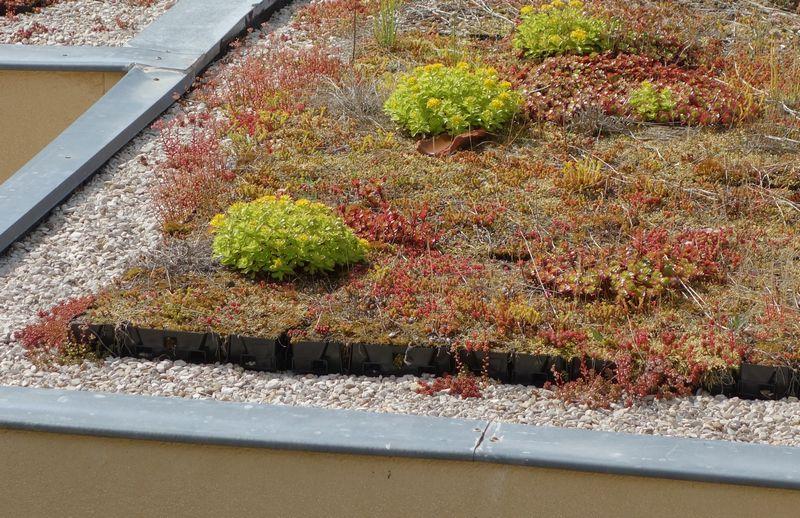Végétalisation d'une toiture terrasse, choix des plantes