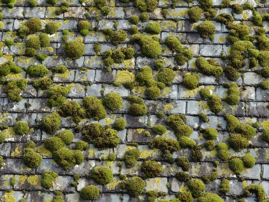 Comment démousser ma toiture en ardoises naturelles svp ?