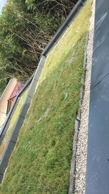 Infiltration d'eau toiture végétalisée