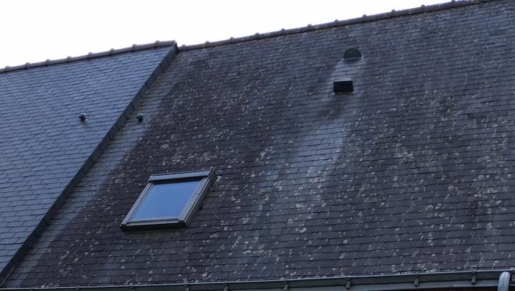 Taches blanches sur toit